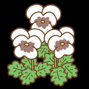 白いパンジーのフリーイラスト Clip art of white pansy