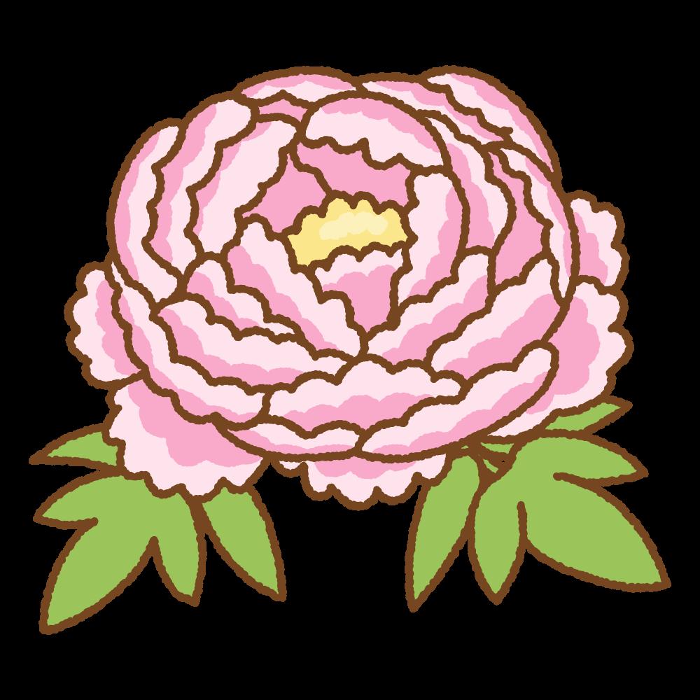 ピンクの牡丹のフリーイラスト Clip art of pink peony