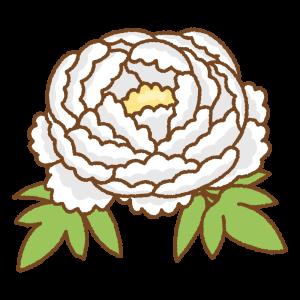 白い牡丹のフリーイラスト Clip art of white peony