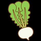 聖護院カブのフリーイラスト Clip art of shogoin-kabu turnip