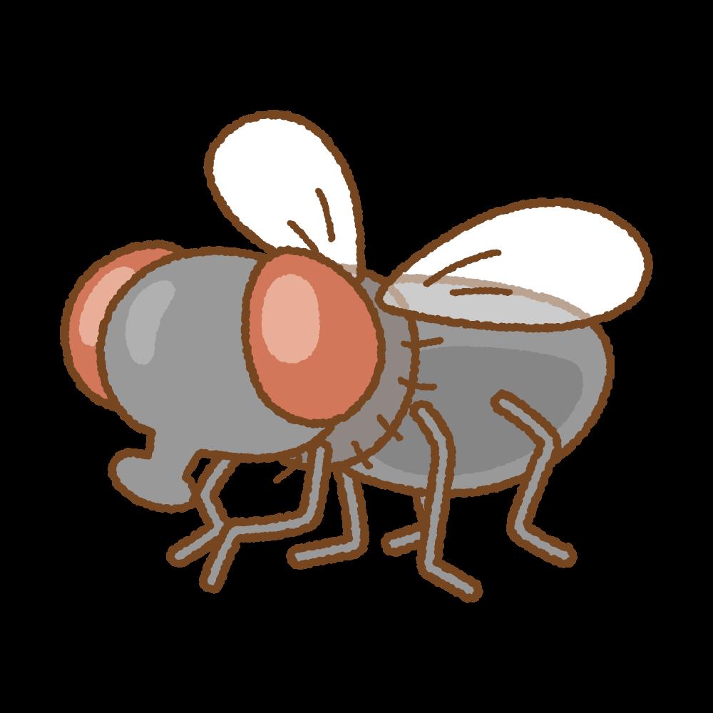 ハエのフリーイラスト Clip art of fly