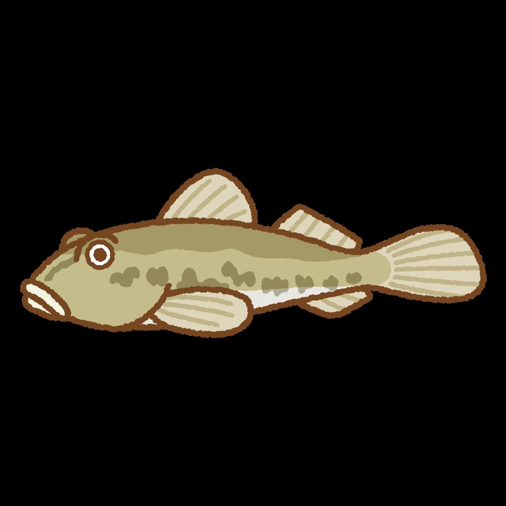 ハゼのフリーイラスト Clip art of goby-fish