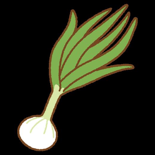 葉タマネギのイラスト