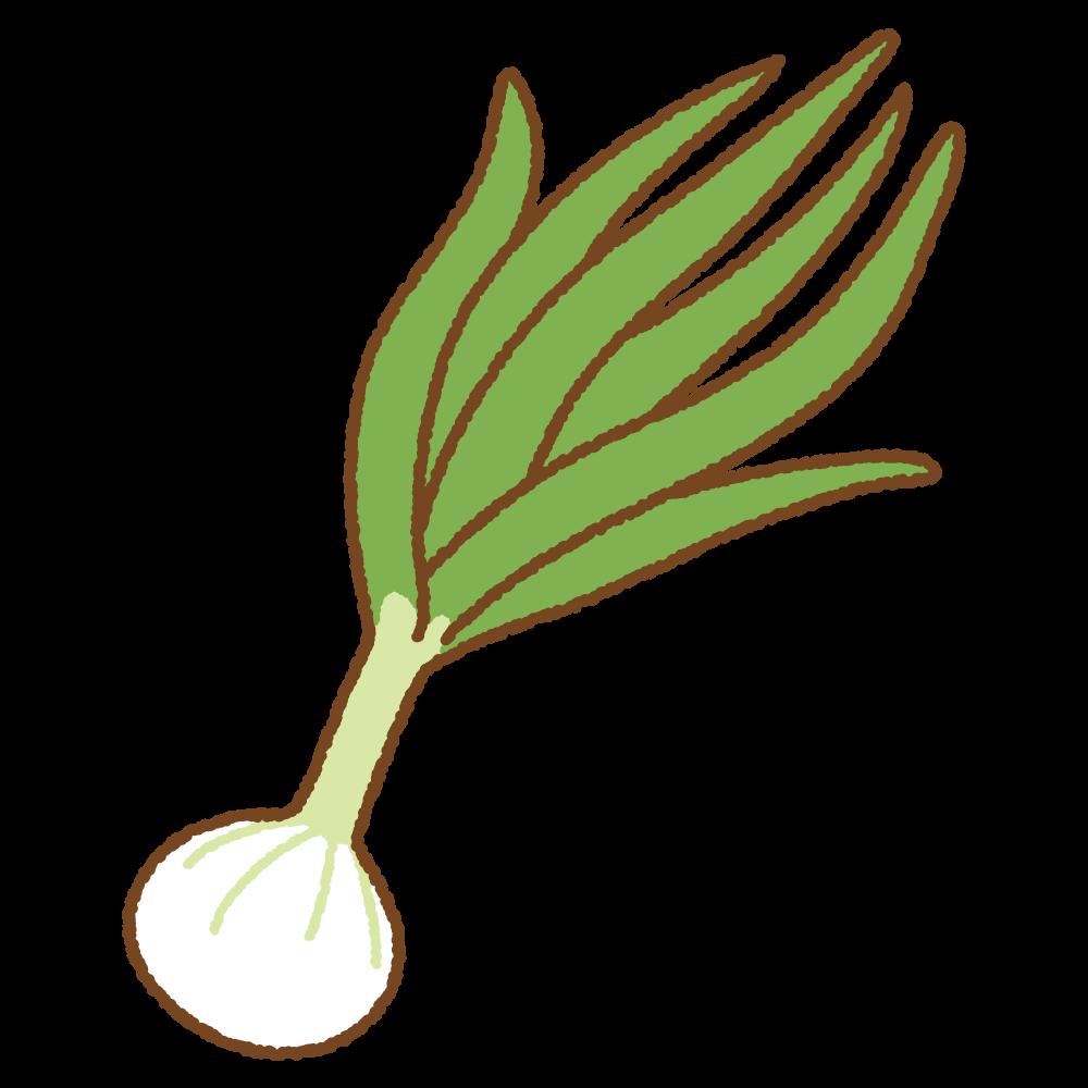 葉タマネギのフリーイラスト Clip art of hatamanagi-onion