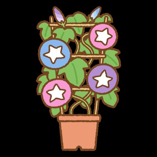 アサガオの鉢植えのイラスト