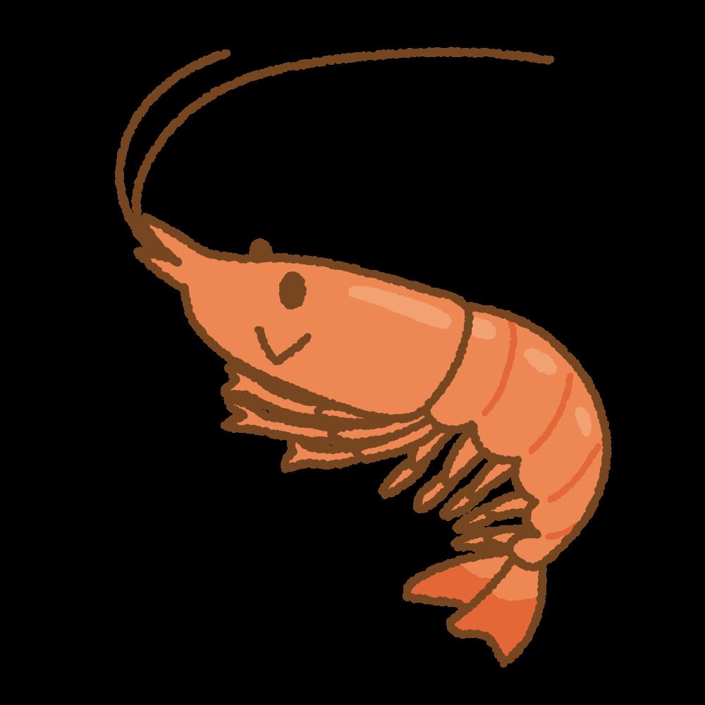エビのフリーイラスト Clip art of shrimp