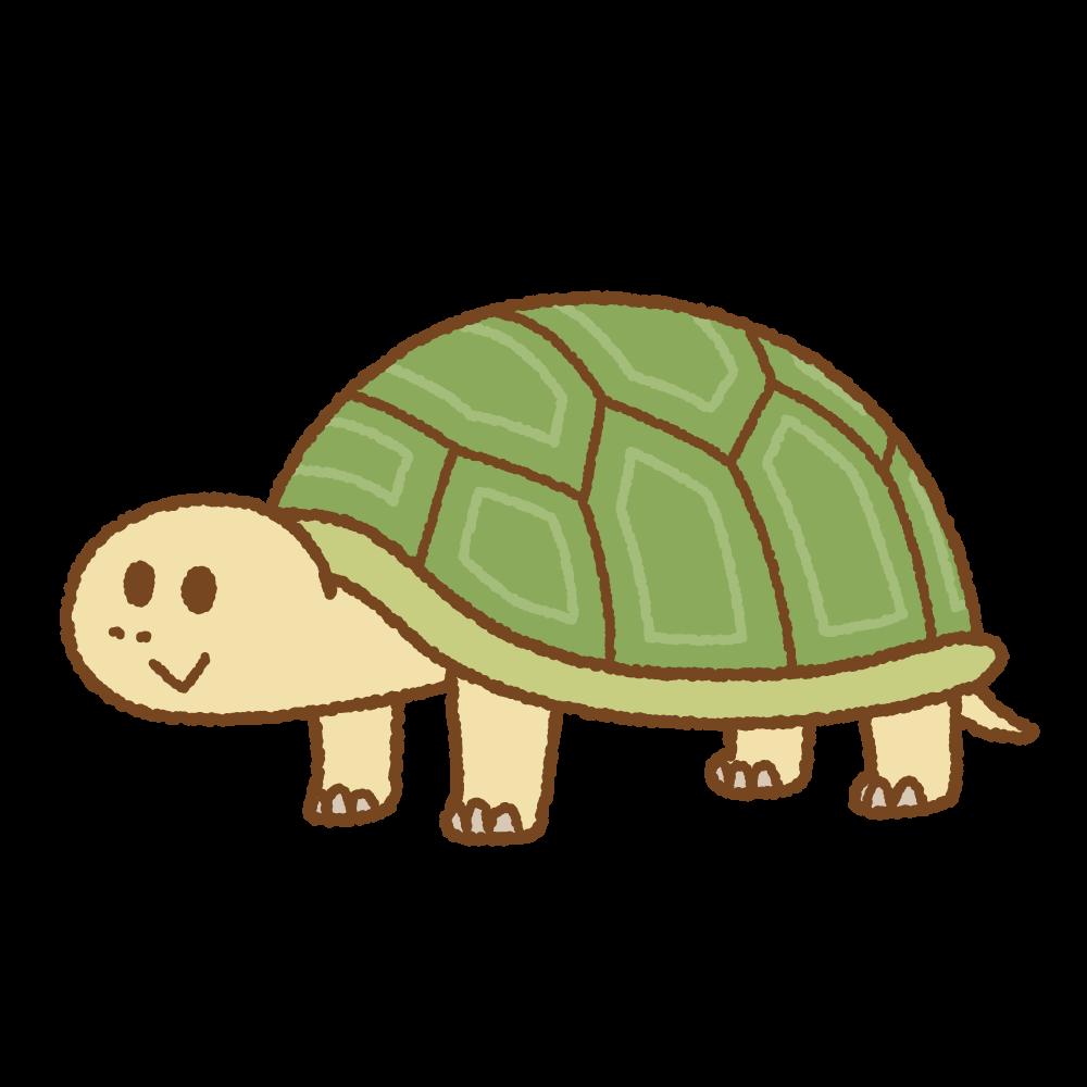 カメのフリーイラスト Clip art of tortoise