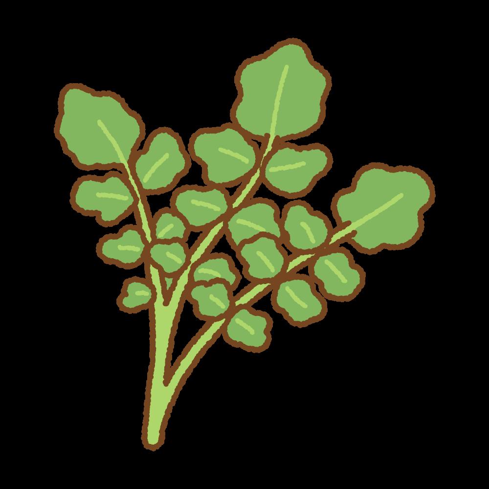 クレソンのフリーイラスト Clip art of watercress