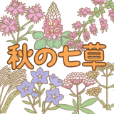 秋の七草のイラスト