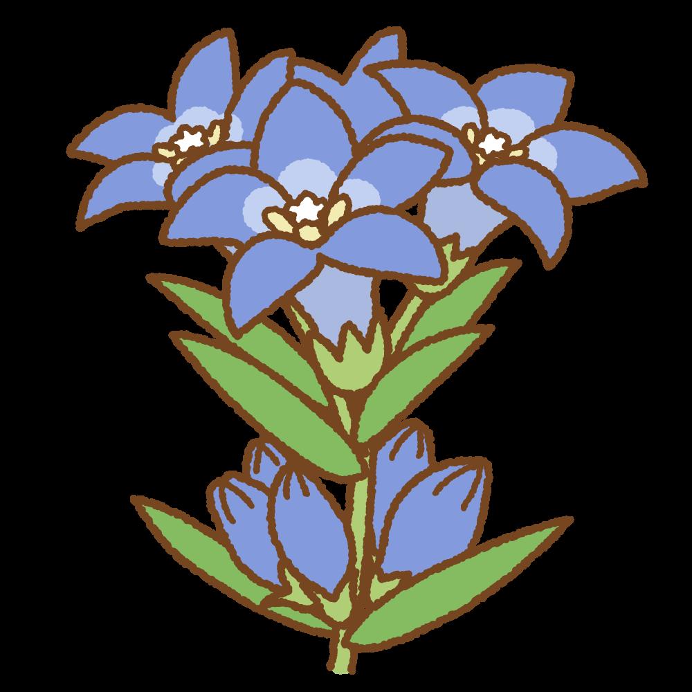 リンドウのフリーイラスト Clip art of autumn-flower
