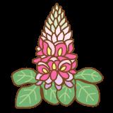 葛の花のイラスト