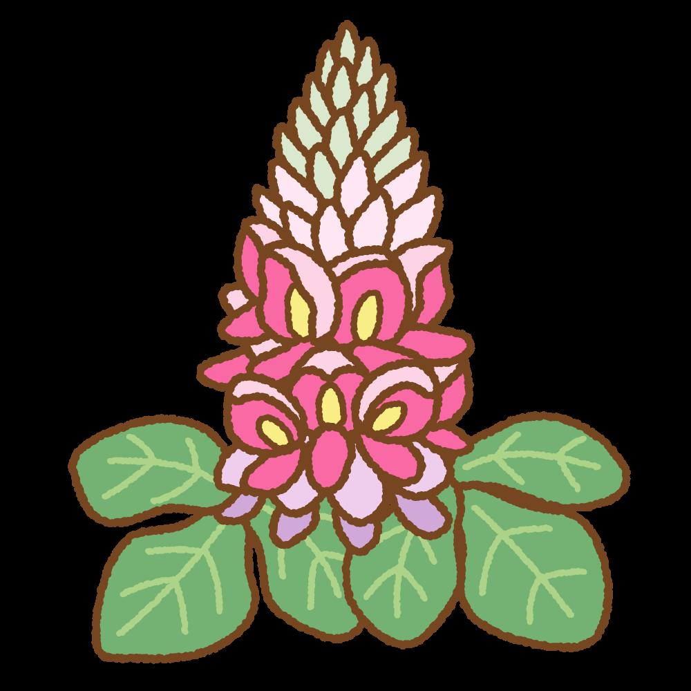 葛の花のフリーイラスト Clip art of kuzu-flower