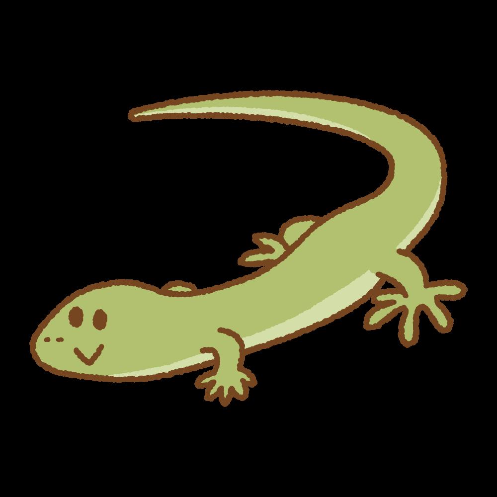 トカゲのフリーイラスト Clip art of lizard