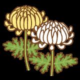 菊のフリーイラスト Clip art of kiku