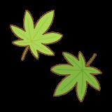 青葉のモミジのフリーイラスト Clip art of green-momiji