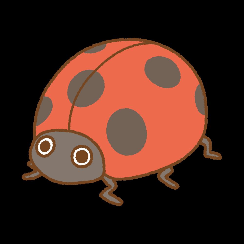テントウムシのフリーイラスト Clip art of ladybugs