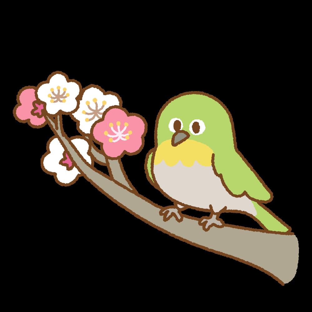 梅にメジロのフリーイラスト Clip art of mejiro-ume