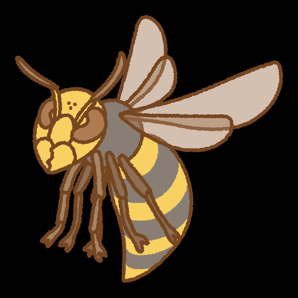 オオスズメバチのフリーイラスト Clip art of asian-giant-hornet