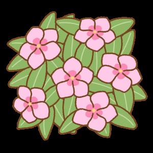 ニチニチソウのフリーイラスト Clip art of rose-periwinkle