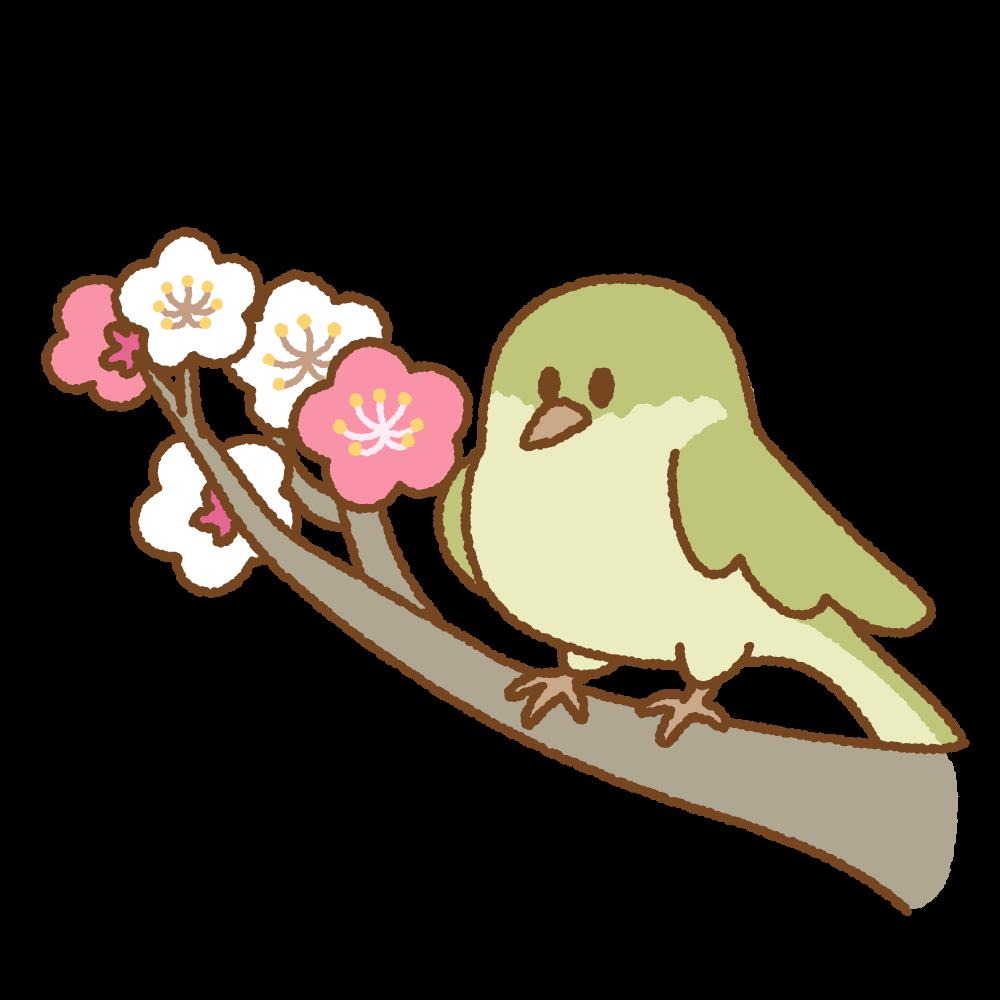 梅にウグイスのフリーイラスト Clip art of uguisu-ume