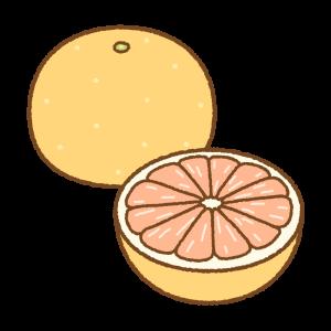 グレープフルーツのフリーイラスト Clip art of grapefruit