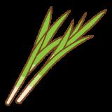 菖蒲のフリーイラスト Clip art of shoubu