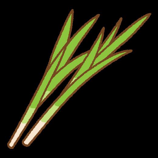 菖蒲のイラスト