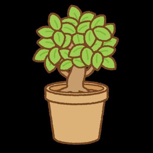 木の鉢植えのイラスト