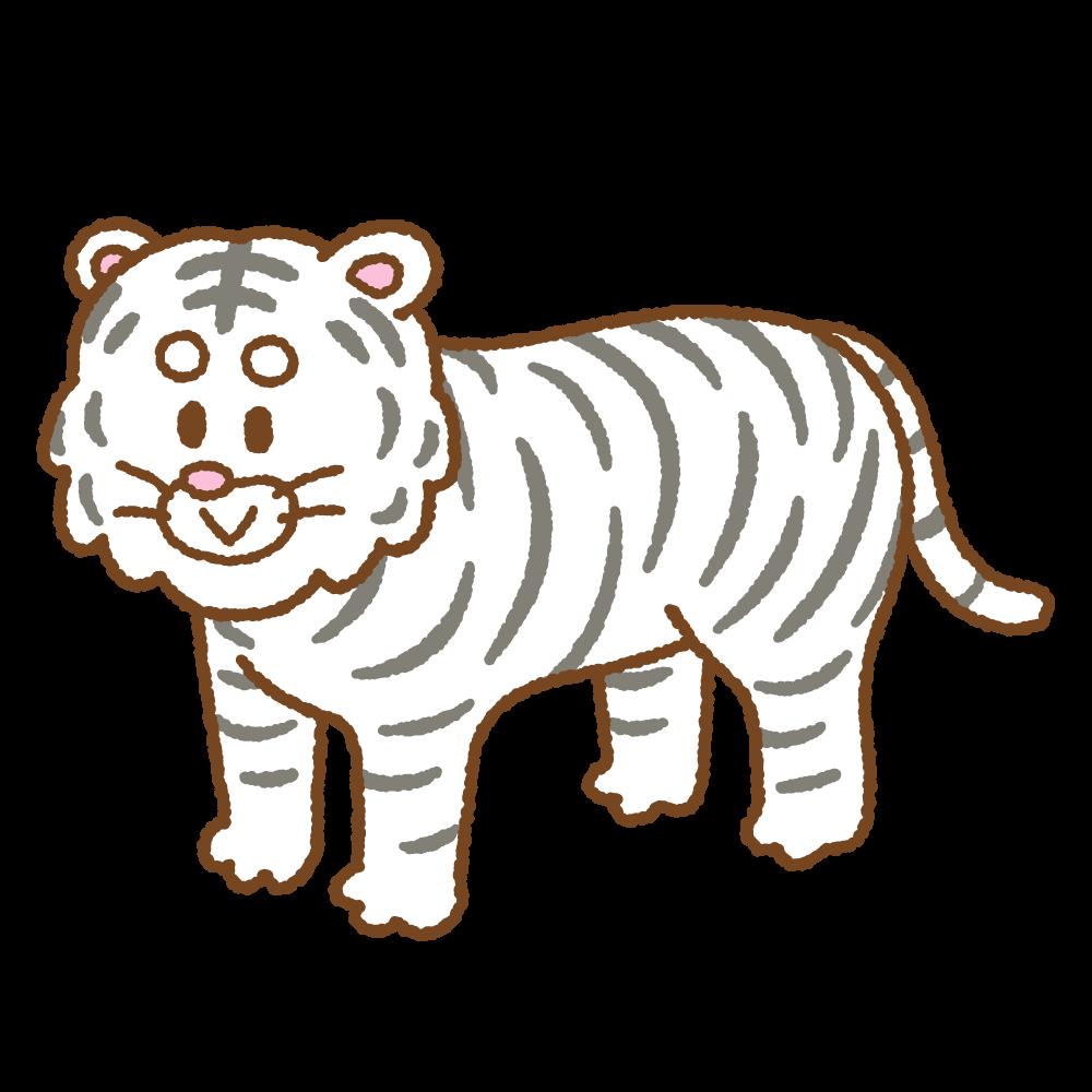 ホワイトタイガーのフリーイラスト Clip art of white-tiger
